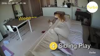 Top 7 Things Dogs Dog At Home Alone | Furbo Dog Camera