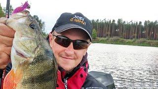 Рыбалка на Днепре, окунь на каждом забросе / как быстро найти рыбу?