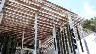 Pérez Art Museum Miami (PAMM): Hanging Gardens