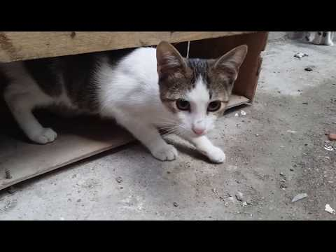Cats are waiting for food every morning - Adorable Cats
