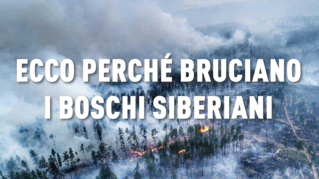Ecco perché bruciano i boschi siberiani