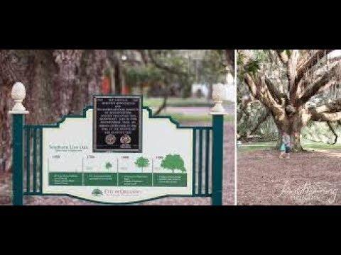 🔴 САМОЕ СТАРОЕ ДЕРЕВО 🔴 в ОРЛАНДО 1688 год - OLDEST LIVE OAK TREE ORLANDO FLORIDA