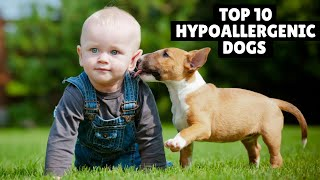 Top 10 Cutest Hypoallergenic Dogs Breeds For Families | hypoallergenic dog | allergy free dogs |