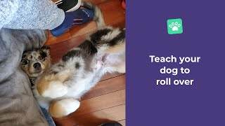 How to teach your dog to roll over