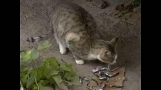 Несколько десятков кошек хотят держать жильцы дома в Череповце