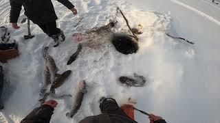 Рыбалка Налим Виктор в деле 14
