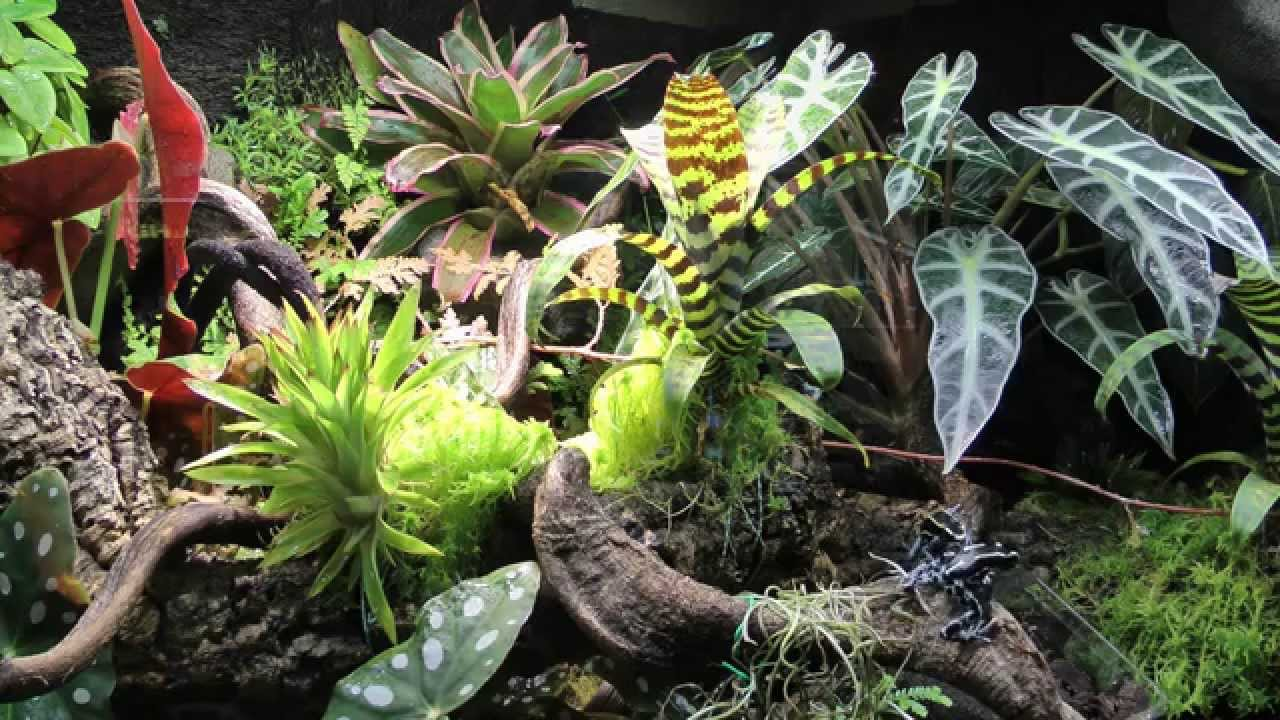 paludarium regenwald terrarium dendrobaten youtube. Black Bedroom Furniture Sets. Home Design Ideas