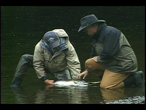 Alaska Boardwalk Lodge Flyfishing for Salmon