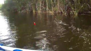 Landing a barely legal Bass