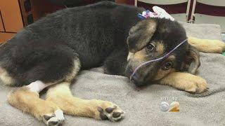 Pet Store Cruelty