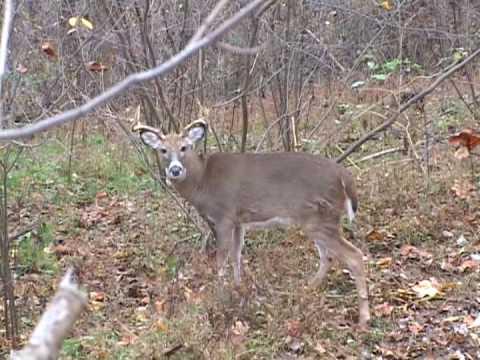 West Virginia Archery Deer Hunting Youtube