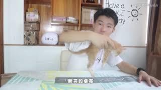 [寵物]網購一只小猫,開箱的那瞬間我就心疼了