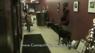 Buffalo, Ny Dog Training, Aggressive Doberman, K-9 Connection