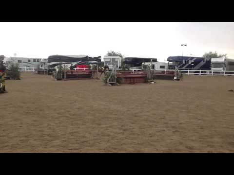 Beat the Boss (12.2hh) and Susie Eddis