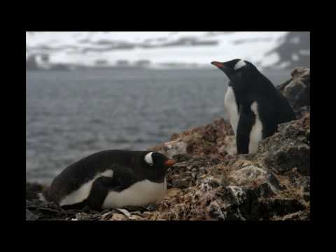 The Best of the Antarctic.wmv