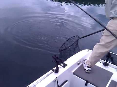 Bill's Big Fish