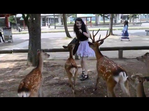 Girl chased by deer in Nara Japan