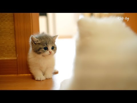 [vlog] started to raise #kitten and #puppy together  first 7 days