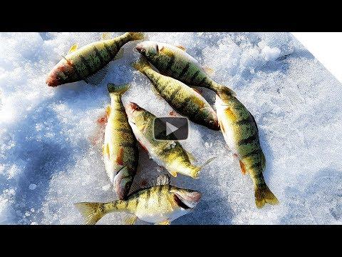 Ice Fishing Lake Erie Perch & Rod Tips