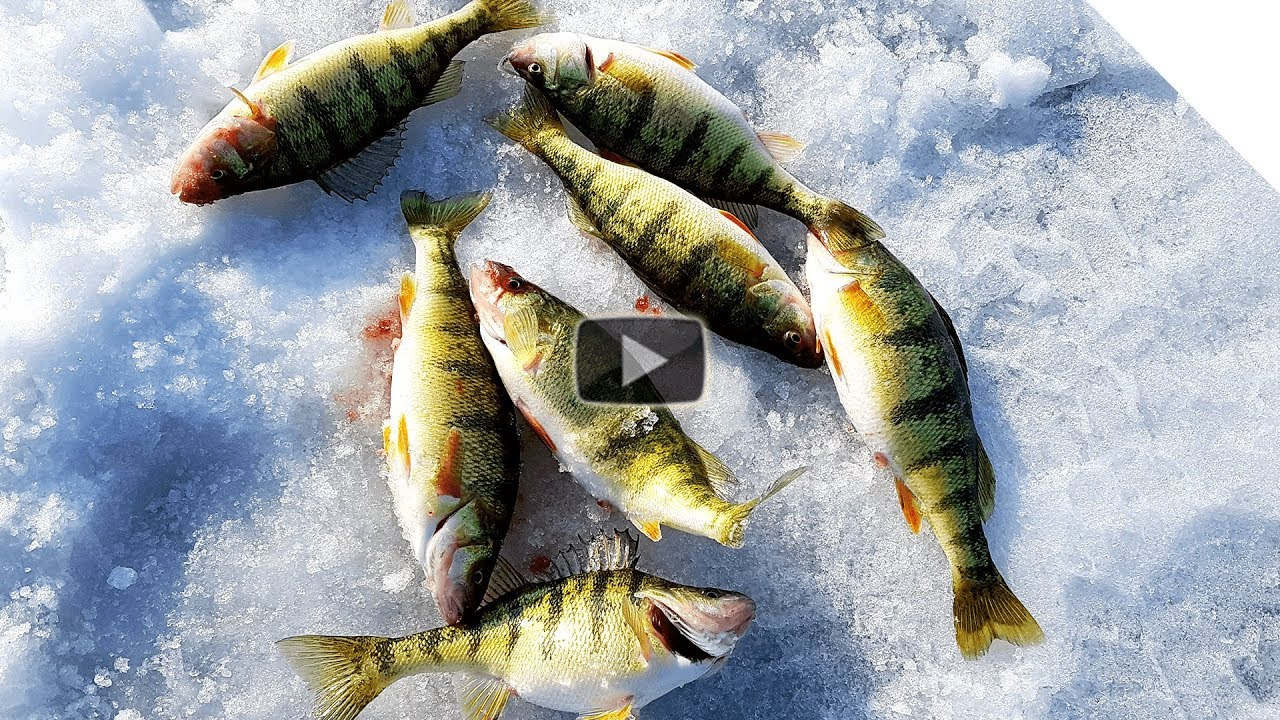 Ice Fishing Lake Erie Perch & Rod Tips