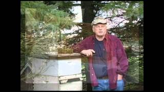 Honey Bee Observation Hives - Announcement Of An Upcoming Bee Culture Article