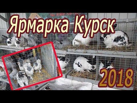 Ярмарка в Курске. Осень 2018 Куры, ути, гуси, кролики, голуби