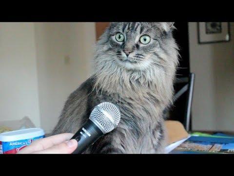 Вопрос: Почему кошки начинают бегать, носиться после того как поедят?