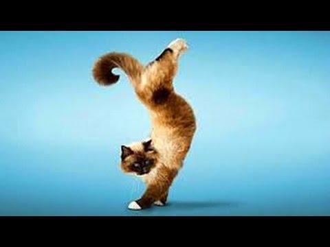 gato vigo vigo !!! ... miauu!!!