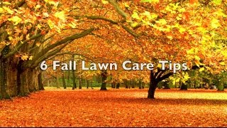 6 Fall Lawn Care Tips