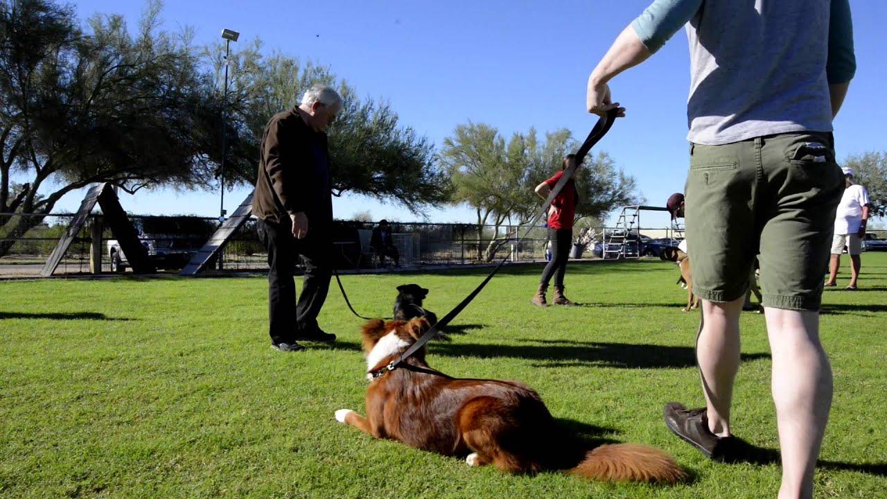 Partners Dog Training | Arizona's Best Dog Trainer | Over