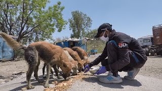 Feeding hungry animals on silent streets during lockdown in Udaipur.