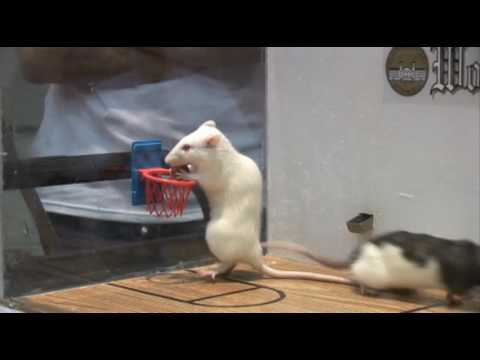 Rat Basketball at Wofford College - YouTube