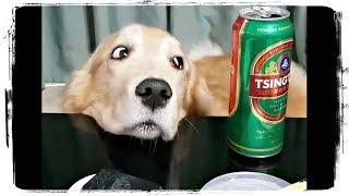 СМЕШНЫЕ СОБАКИ 2018, приколы с животными  | FUNNY DOGS 2018, fun with animals #512