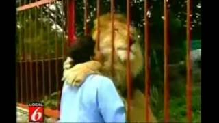 Lion Kisses and Hugs its Rescuer | Wild Animals Do Have Souls!