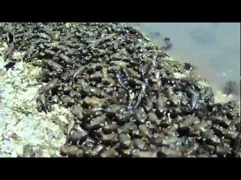 Plague of Frogs.mpeg - YouTube