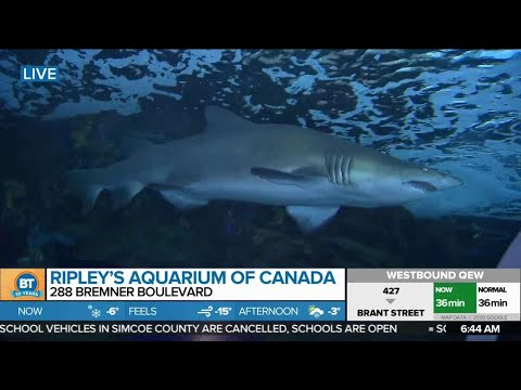 Nicole LIVE At Ripley's Aquarium Of Canada (1 Of 5)