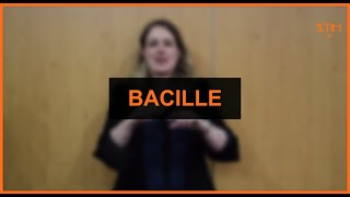 Biologie - Bacille