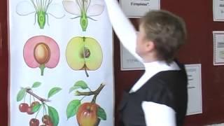 Відкритий урок з теми Плоди