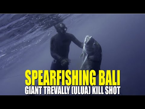 Spearfishing Bali, Giant Trevally  Kill Shot