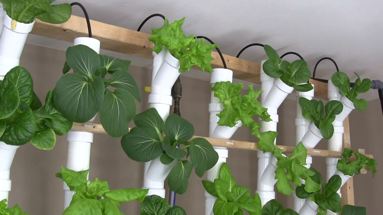 Basement Hydroponic Tower Garden Version 20 YouTube