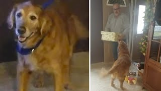 Dieser Hund bekommt Lebensfreude zu Weihnachten geschenkt!