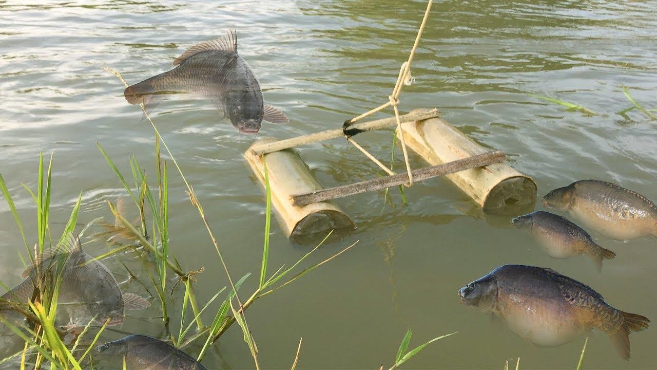 Fishing bamboo trap how to make fish bamboo fishing trap for Lot of fish
