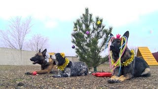 Щенячий восторг: самые крутые собаки Волгограда встречают свой год