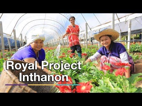 Royal Project Doi Inthanon