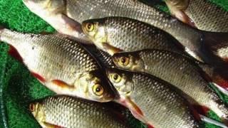 как быстро посолить и высушить рыбу зимой