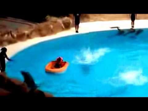 WOW! Atraksi Anak Kecil vs Ikan Lumba-Lumba-Panas dan Tegang