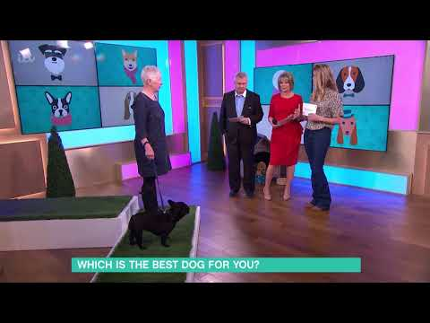 Which is the Best Dog for You? - French Bulldog | This Morning