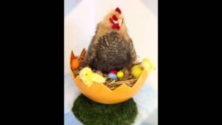 PA6 et PA7 - Poule dans un nid ou poule à suspendre