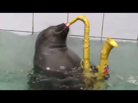 Epic Sax Seal