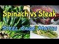 Spinach vs Steak – Steel Cage Match – Cronometer